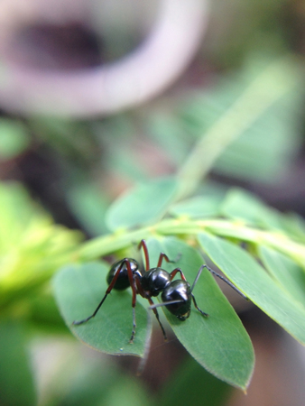 close up of worker ant on leaf with blur background Stock Photo