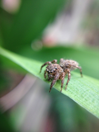 close up of spider with tiny eyes with blur background