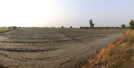 preparing wet dirt on rice paddy field  with nobody,