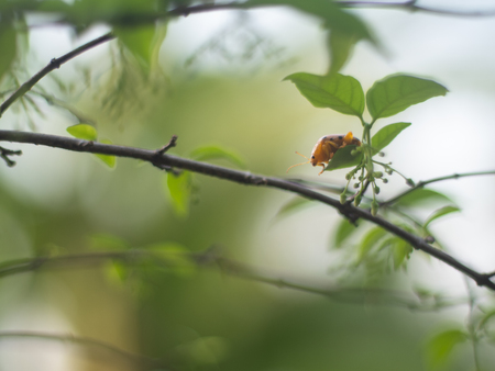 close up of pumpkin beetle with blur background