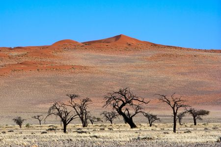 Red Dunes, Namibia Stock Photo - 6446178