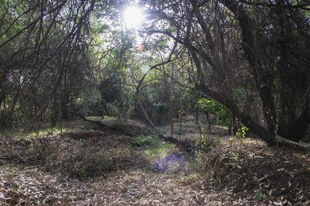 Nature forest scape Imagens