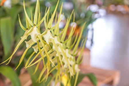 Rare orchid with blurred background Imagens