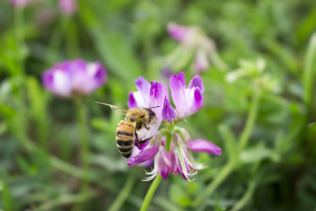 bee on flower: Flower & Bee