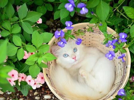 flowers cat: white kitten in basket