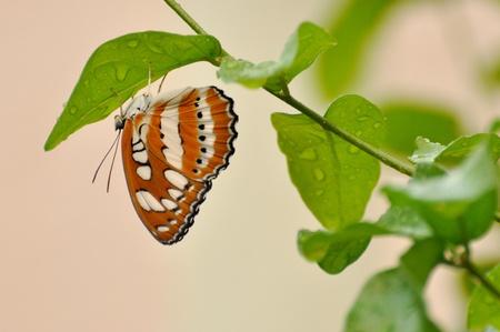 butterfly on leaf Standard-Bild