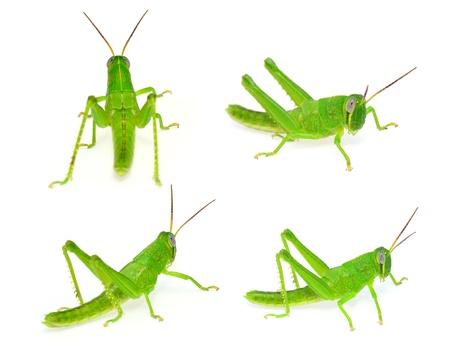 grasshopper set