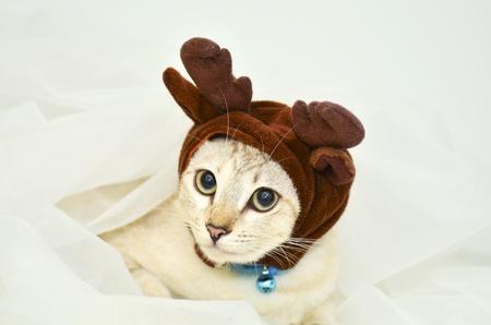 kitten dress up elk hat