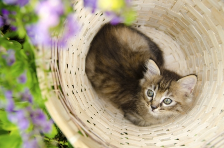 cute kitten in basket photo