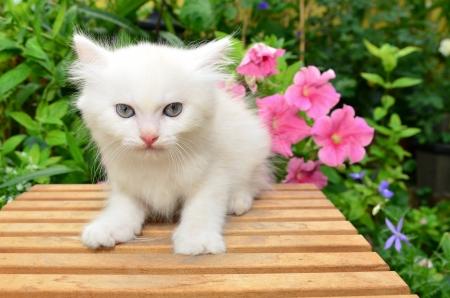 cute white kitten in garden
