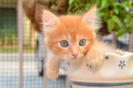 cute kitten in pot Standard-Bild