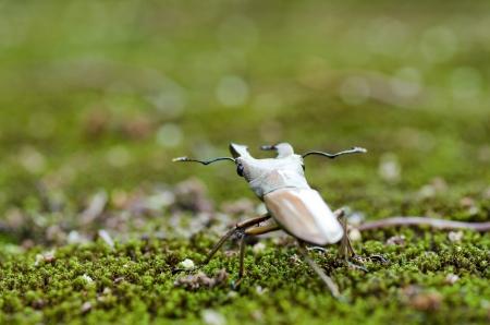 Stag beetles  Lucanidae