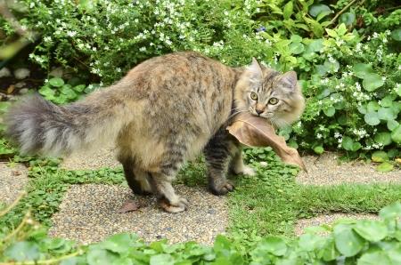 cute tabby kitten hold the leaf