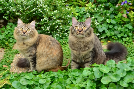 Two cute tabby kittens photo