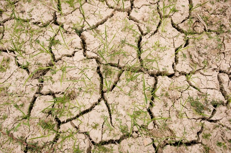 Dried and cracked earth with grass photo
