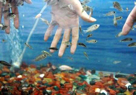 Hand in water with fishes (Fish spa for skin care).