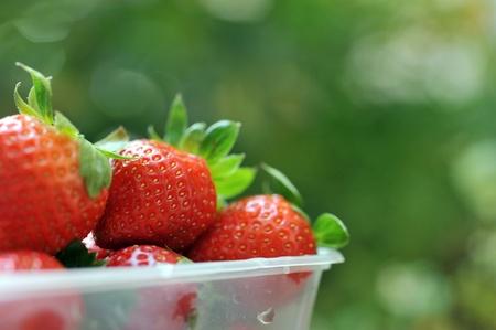 strawberry baskets: strawberries in a basket in the garden.