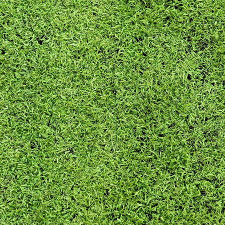 natural green trimmed grass field background for sports.  photo