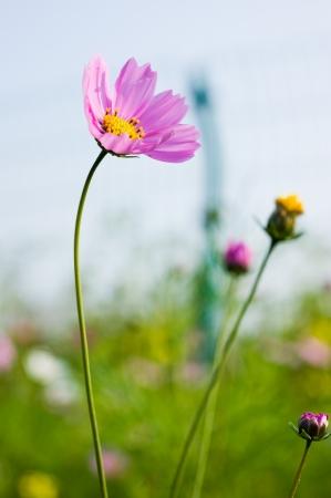 Lovely garden flowers in field Stock Photo - 13693008