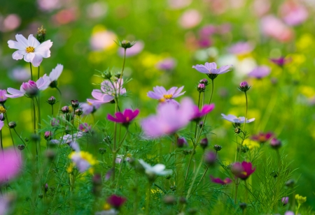 grassy field: Colorful wildflowers blossoming in field