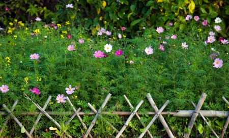 wattle: green plants and colorful flowers behind bamboo fence. Stock Photo
