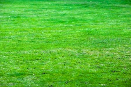 Huge park with plenty of grass.