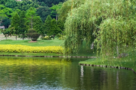 willows: Lakeside garden and weeping willow tree.