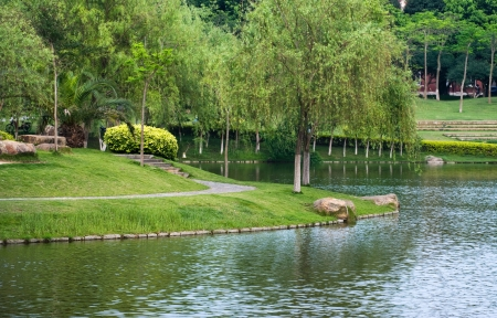 weeping willow: Lakeside garden and weeping willow tree.
