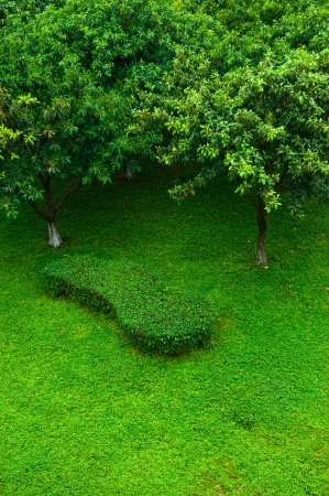 tree farming: Top view of green lawn with tree.