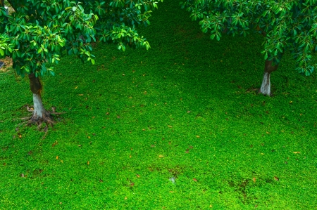 Top view of green lawn with tree. photo