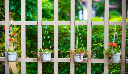 White picket fence and green plants at country house.  photo