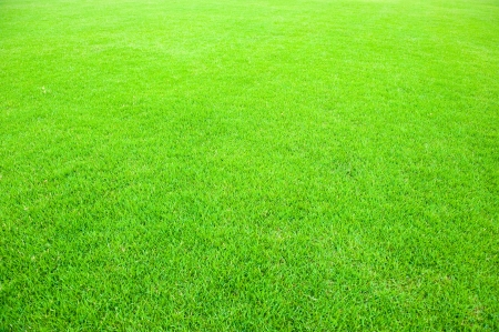 natural green trimmed grass field background for sports.