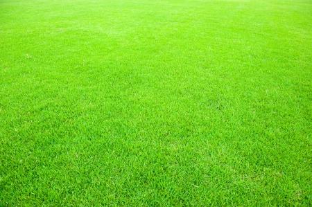 natuurlijke groene afgesneden gras veld achtergrond voor sport.