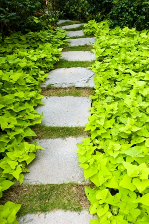 view of stone path in garden. Stock Photo - 13781322