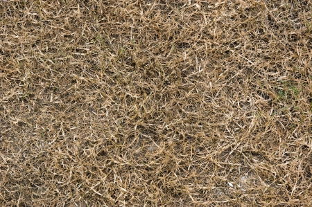 close up of dead dry grass on the ground.  Stock Photo - 13827369