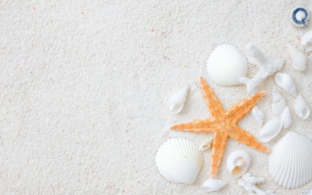 Beach with many seashells and starfish. photo