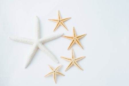 Two white starfish together and another four small starfish around the side.   photo
