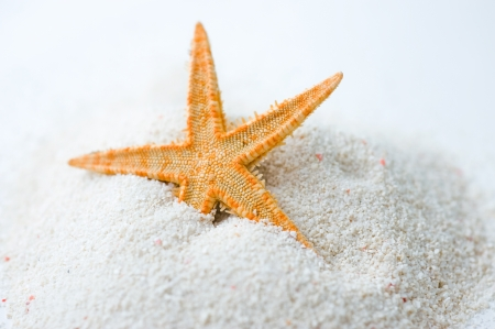 Beautiful starfish on bright white sand.  photo