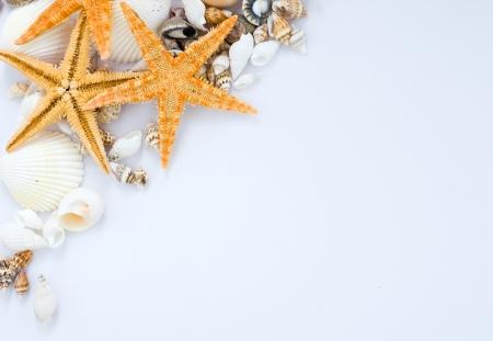 many seashells and starfish isolated on white background.  photo