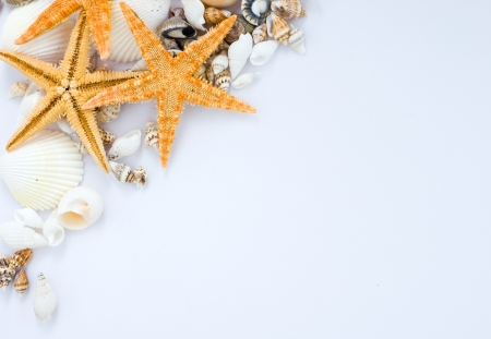 sea side: many seashells and starfish isolated on white background.