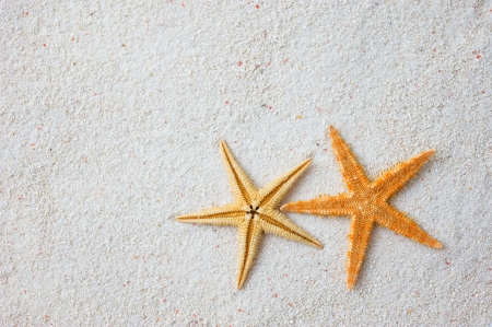 Two beautiful starfish on bright white sand.   photo
