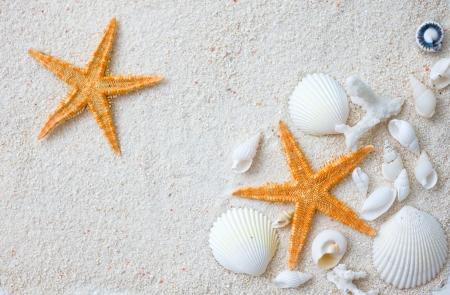 Beach with many seashells and starfish. photo