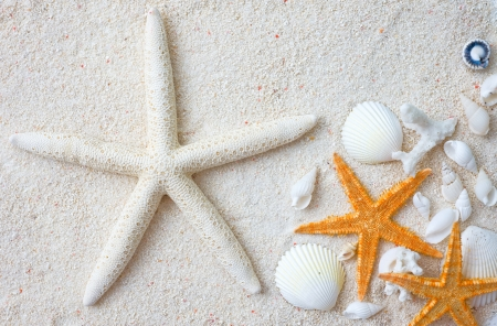Beach with many seashells and starfish. Macro with extremely shallow depth of field