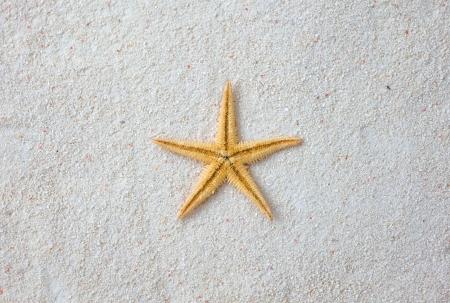 starfish on the beach, vacation memories. photo