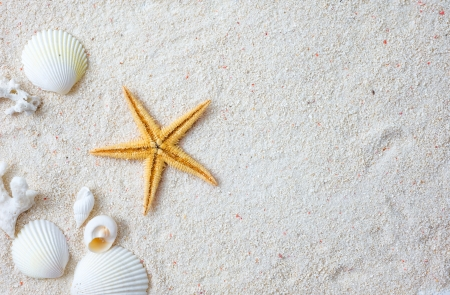 Beach with many seashells and starfish. Stock Photo