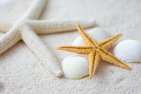 Beach with many seashells and starfish. Macro with extremely shallow depth of field Stock Photo - 13830441