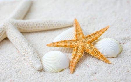 Beach with many seashells and starfish. Macro with extremely shallow depth of field  photo