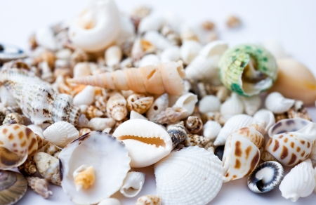 scraped: Sea shells scraped together. Macro with extremely shallow dof.