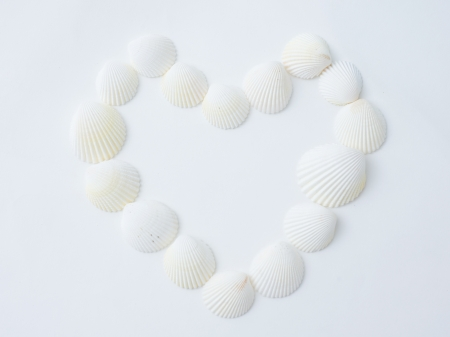 A heart made of sea shells. photo