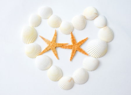 Two starfish and a heart made of sea shells isolated on white background.   photo